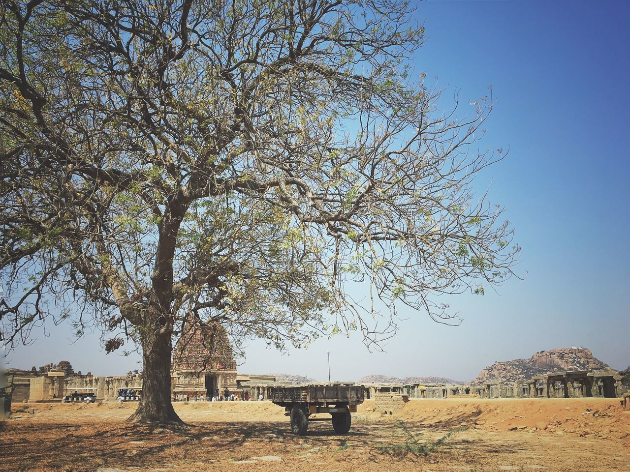tree, nature, field, landscape, clear sky, animal themes, day, domestic animals, beauty in nature, outdoors, tranquility, one animal, mammal, grass, bare tree, no people, scenics, sky, architecture, branch