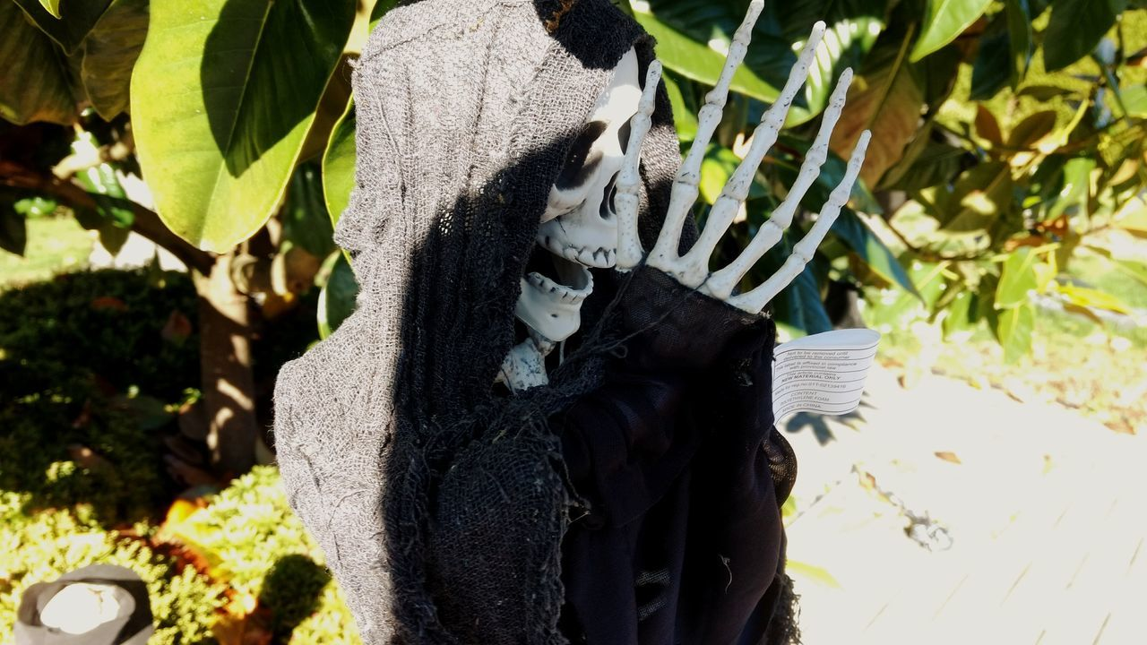 Day Outdoors Plant No People Nature Growth Close-up Animal Themes Mammal Skeleton Halloween Spooky Spoopy EyeEm Selects EyeEmNewHere Photography Themes Photographing Artsy Urban Scary Horror Decoration Halloween Horrors Halloween_Collection Arts Culture And Entertainment