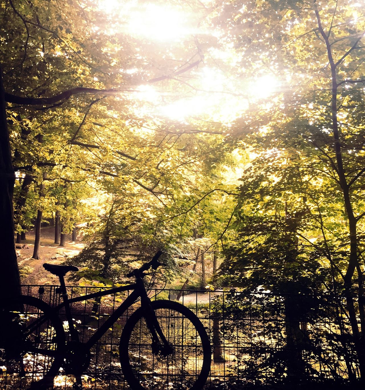 Bike Biking Nature Naturelovers. Autumn Trees Woods
