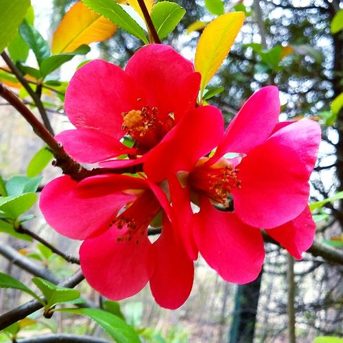 Nature Red Beauty In Nature Growth No People Day Flower Petal Outdoors Close-up Tree Plant Flower Head Fragility Blooming