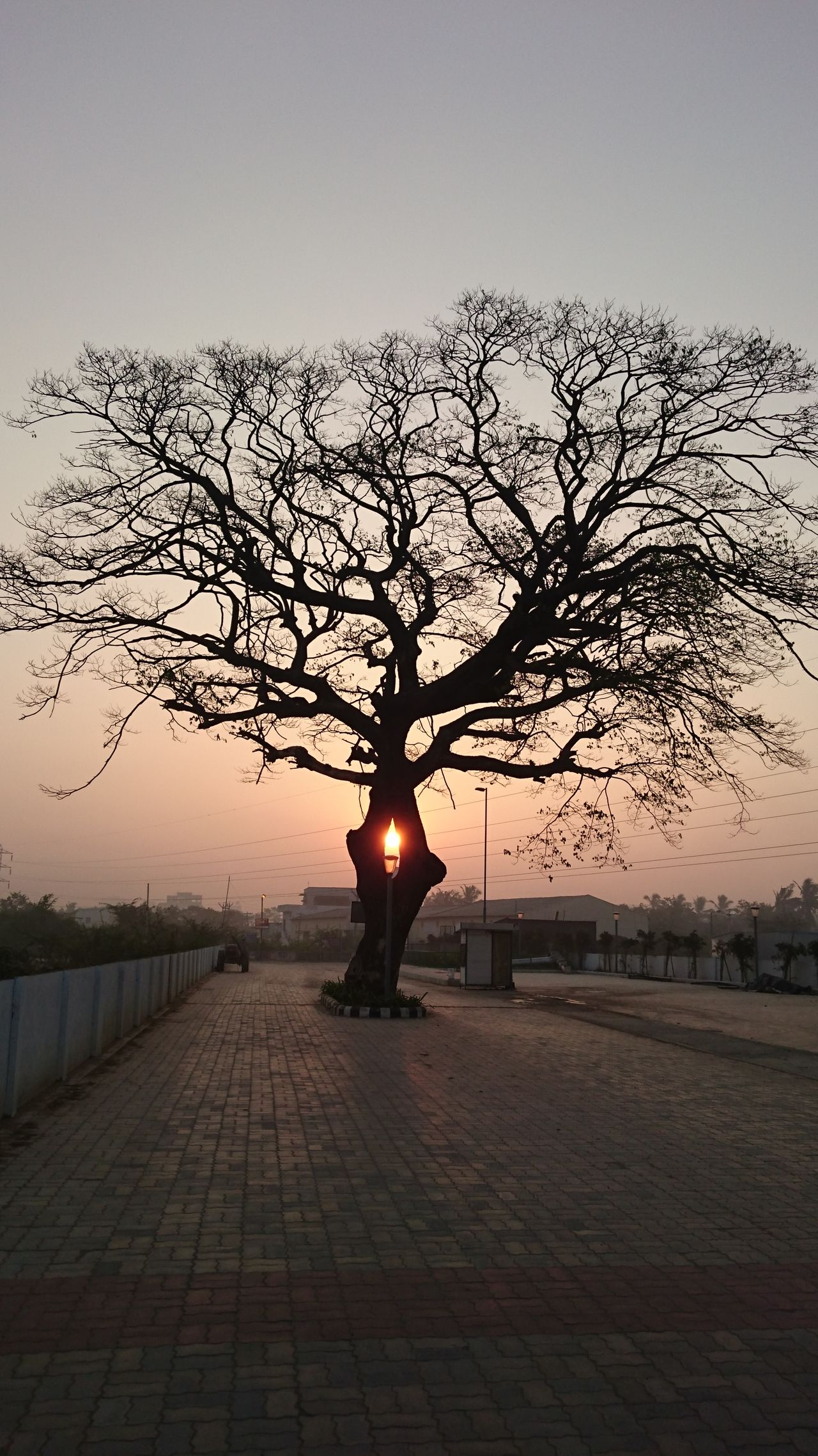 Architecture Bare Tree Day Nature No People Outdoors Sky The City Light Tree