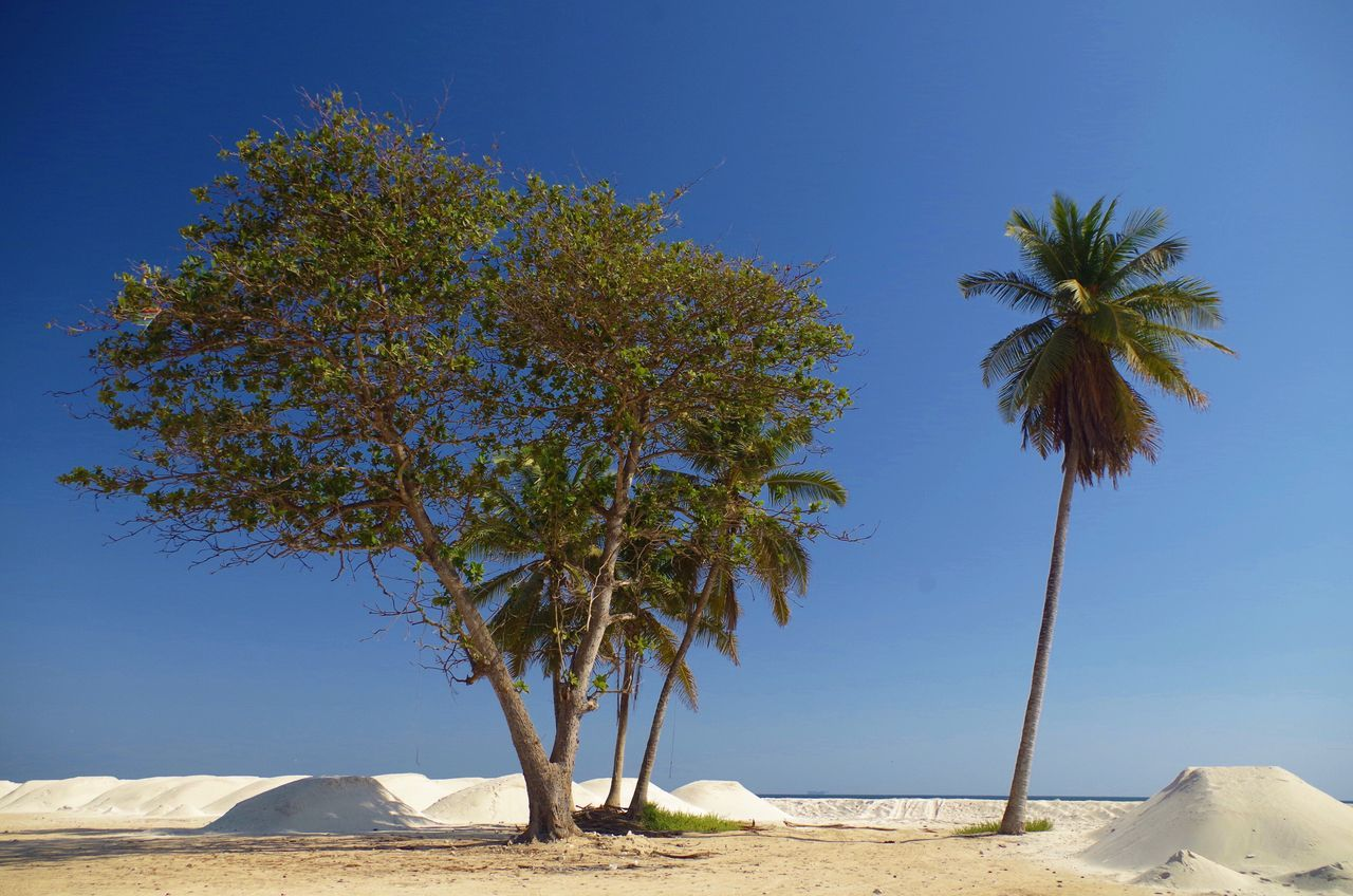 tree, sand, palm tree, beach, day, nature, tranquility, tranquil scene, clear sky, beauty in nature, outdoors, scenics, no people, sunlight, blue, growth, sea, landscape, sky