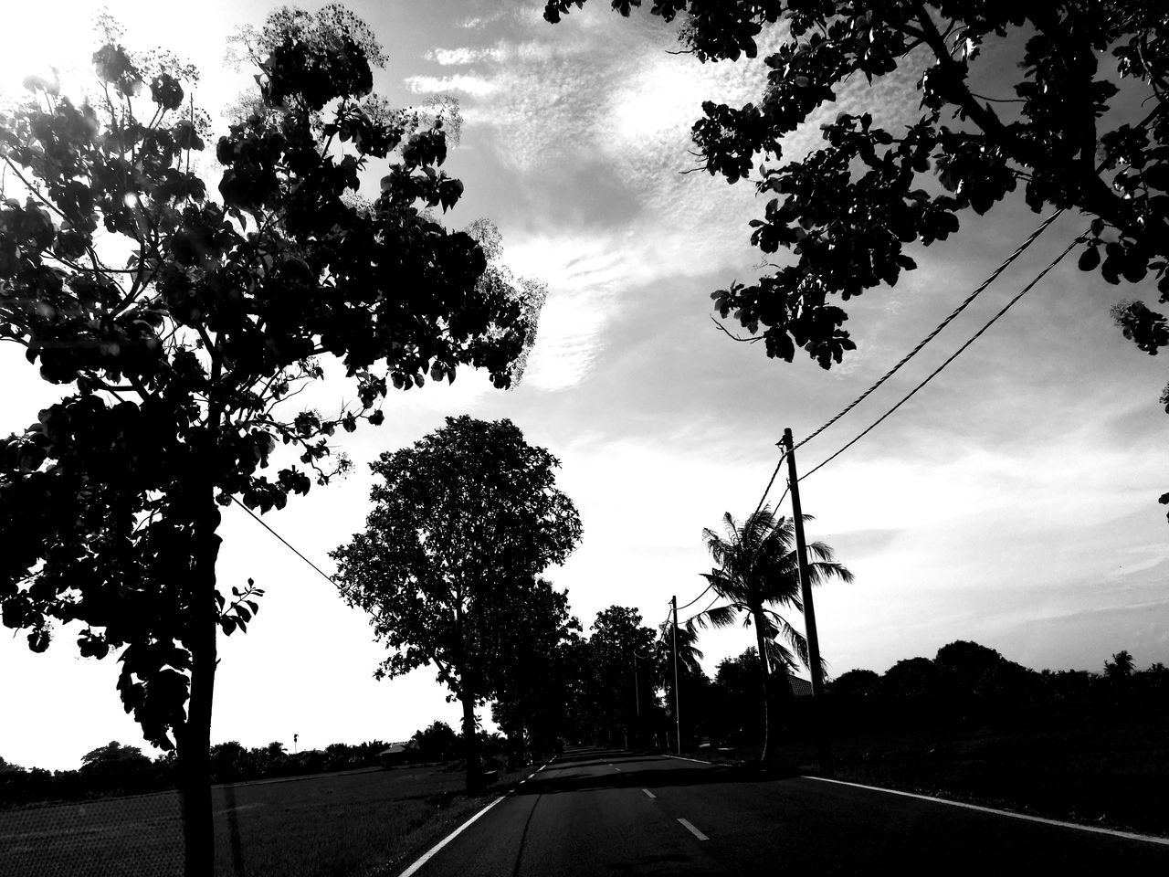 tree, road, sky, cloud - sky, transportation, the way forward, car, day, outdoors, no people, land vehicle, scenics, nature, beauty in nature