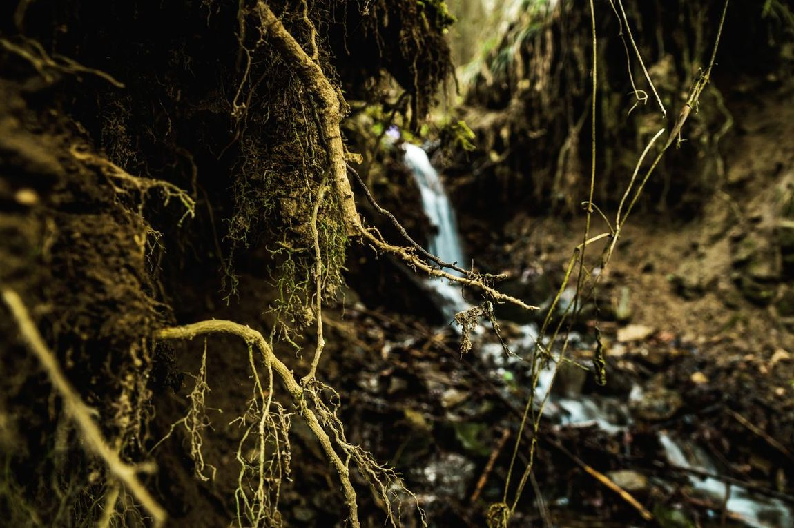 down the waterfall First Eyeem Photo Water Down Small Waterfall But Beautiful Forest Branches Sonyalpha Original Photography EyeEmNewHere