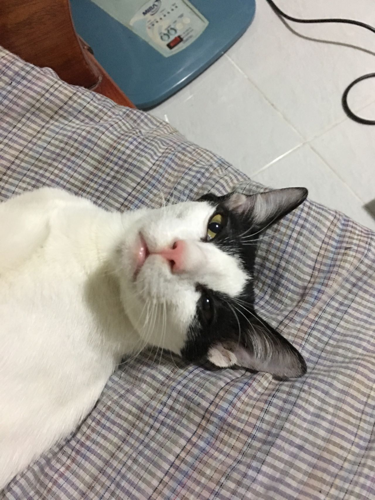 When you are still dizzy after woke up... Cat Dizzy Wake Up Pet Minney EyeEm