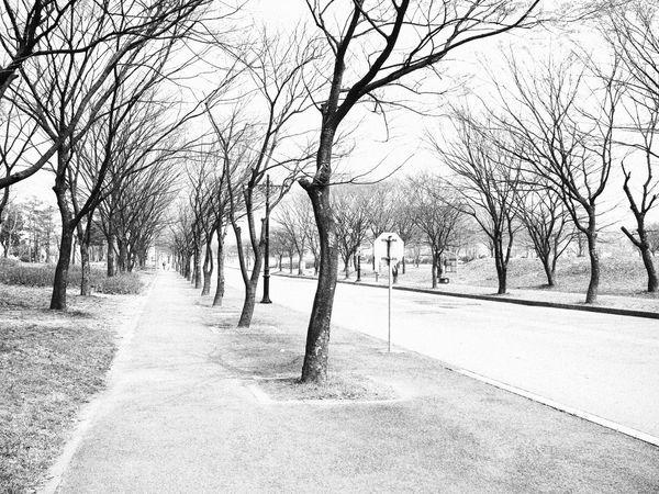 Showcase April Spring Tree Kering Dry Global Warming Globalwarming