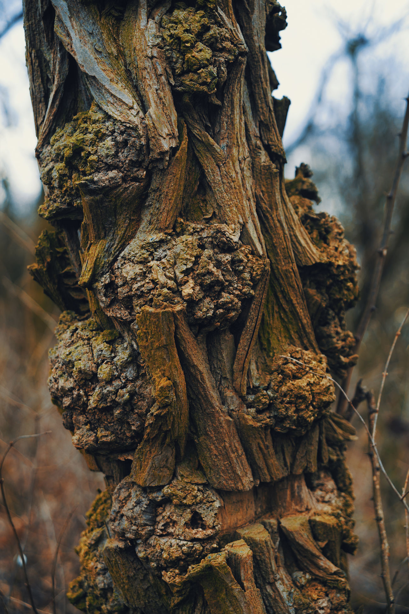 beautiful Tree Bark Beautiful Nature Beauty In Nature Day Exceptional  Forest Nature Nature No People Outdoors Remarkable Rind Tree Tree Trunk Wood - Material