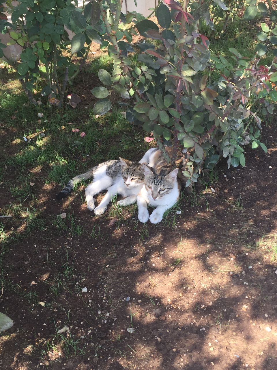 animal themes, high angle view, growth, mammal, plant, nature, outdoors, no people, day, domestic animals, domestic cat