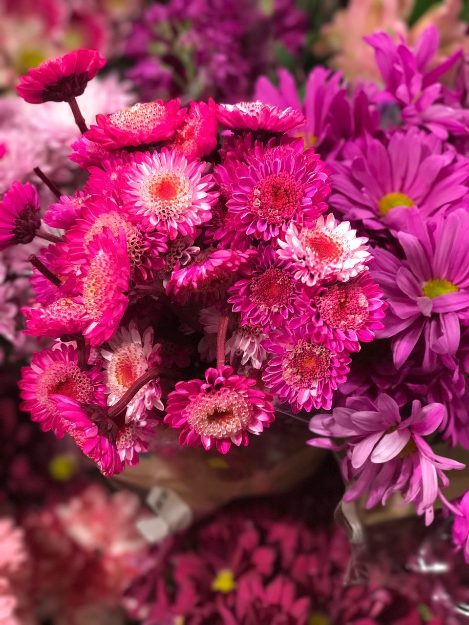 flower, fragility, growth, beauty in nature, petal, nature, freshness, pink color, no people, plant, flower head, blooming, day, close-up, outdoors
