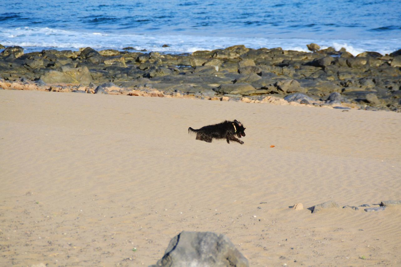 One Animal Animal Themes Animals In The Wild Water Beach No People Beauty In Nature Nature Sea Outdoors Day Dog Dog Playing Dog Playing On The Beach Playing