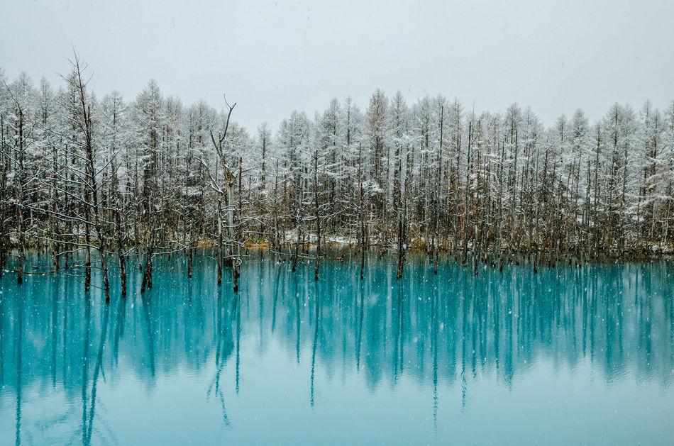 Beautiful stock photos of peaceful,  Beauty In Nature,  Day,  Dreamlike,  Horizontal Image