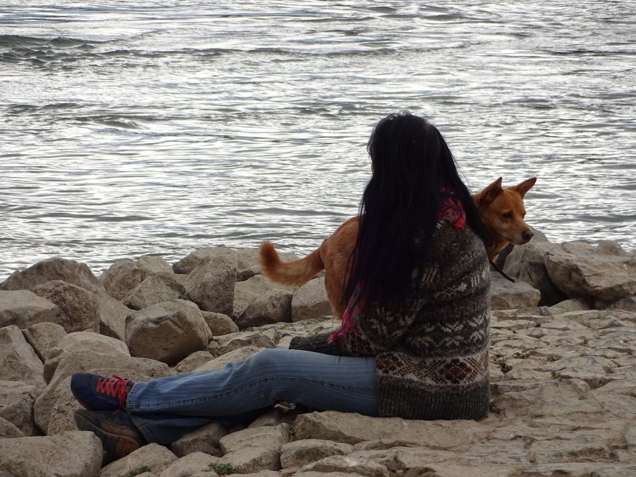 I with a baby at the rhine Animal Themes Beach Beauty In Nature Bonn Day Dog Domestic Animals Full Length I With A Baby At The Rhine Mammal Nature One Animal One Person Outdoors Pet Clothing Pets Real People Rhine Sea Water
