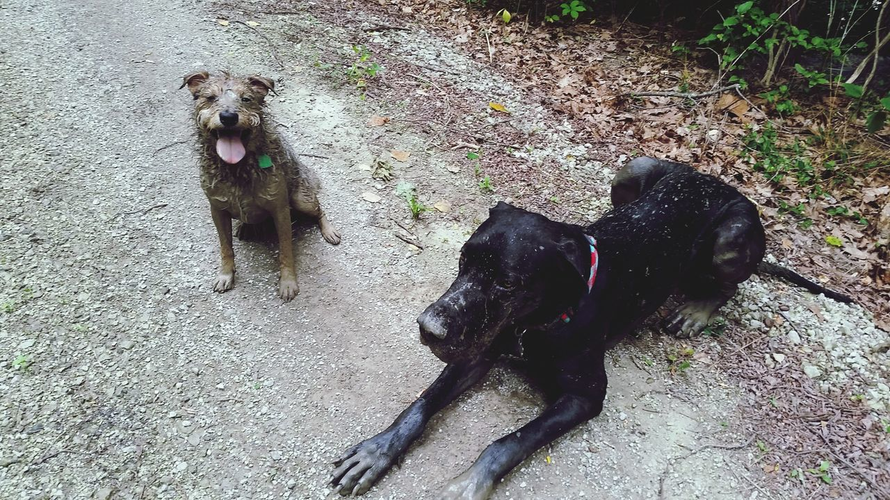 Enjoying Life My Dogs Are Cooler Than Your Kids I Love Dogs Muddy Down And Dirty