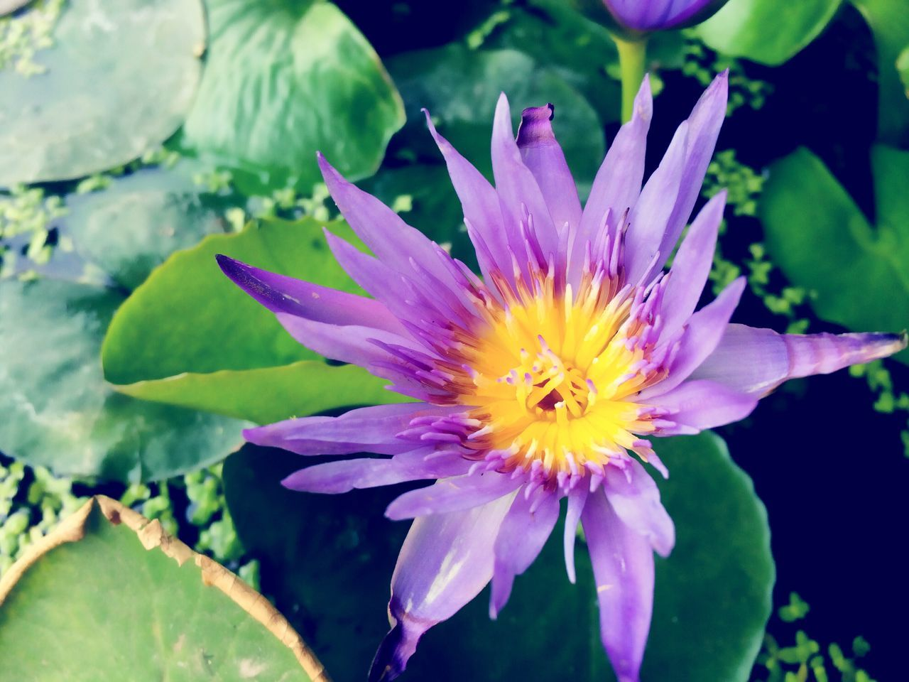 Green Flower Freshness Petal Nature Beauty In Nature Fragility Growth Flower Head Plant Close-up Pink Color Blooming Leaf No People Outdoors Passion Flower Lotus Water Floating On Water Plant