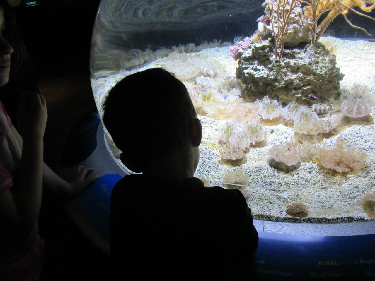 Boys Childhood Discover Your City Discovering New Things Learning Mesmerized The Innocence Of A Child Togetherness Zoo
