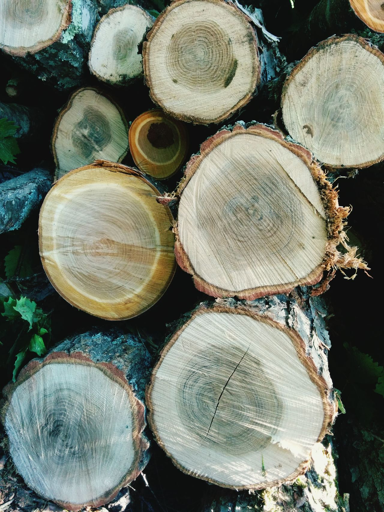 Beautiful stock photos of wood, Abundance, Circle, Close-Up, Day