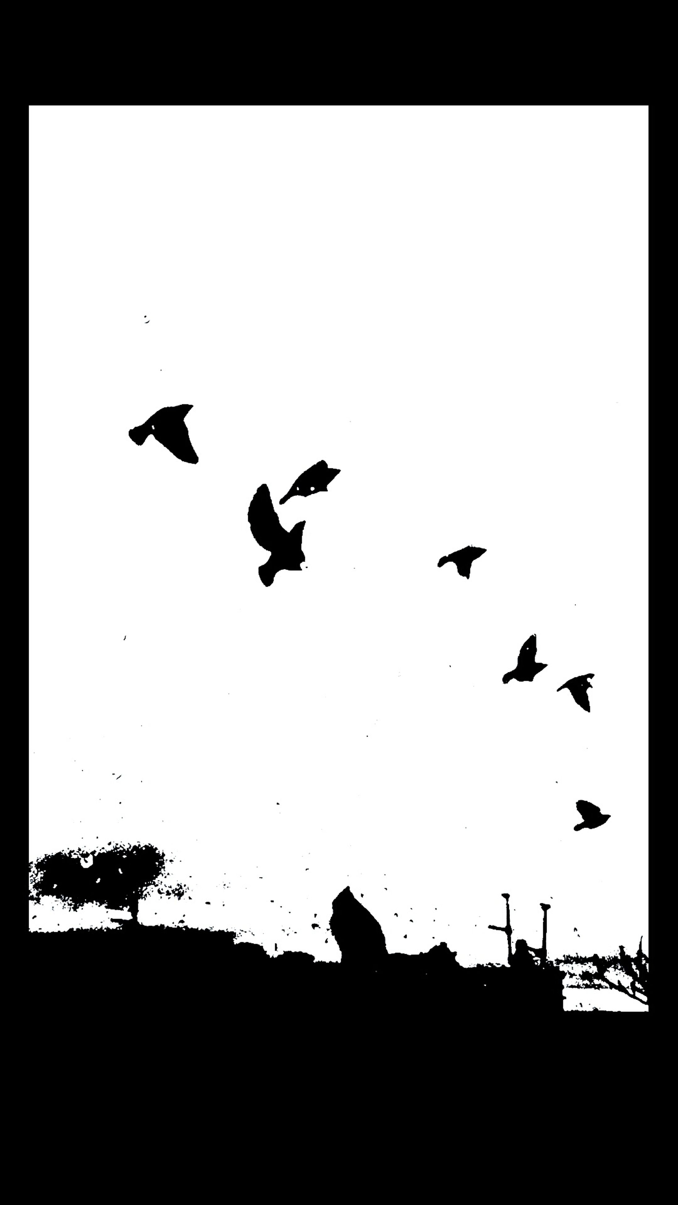 bird, animal themes, animals in the wild, flying, wildlife, silhouette, transfer print, flock of birds, low angle view, clear sky, auto post production filter, spread wings, sky, medium group of animals, togetherness, mid-air, nature, outdoors, copy space