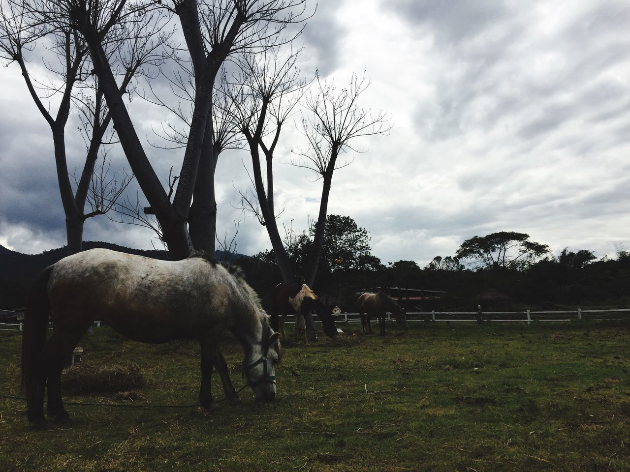 Cloud - Sky Tree Sky Domestic Animals Animal Themes Field Bare Tree Outdoors No People Mammal Livestock Horse Nature Landscape Grass Day