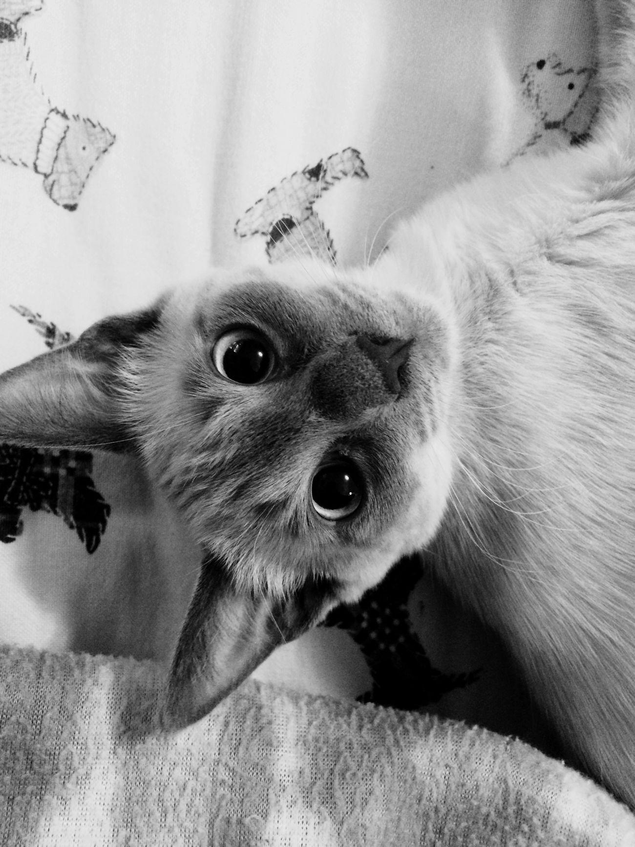 Meow Cats Catstagram Catsagram Emmie Kittens