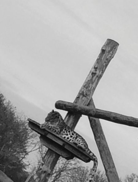 Older Photo Low Angle View Sky Cross No People Outdoors Day Close-up Tree Leopard
