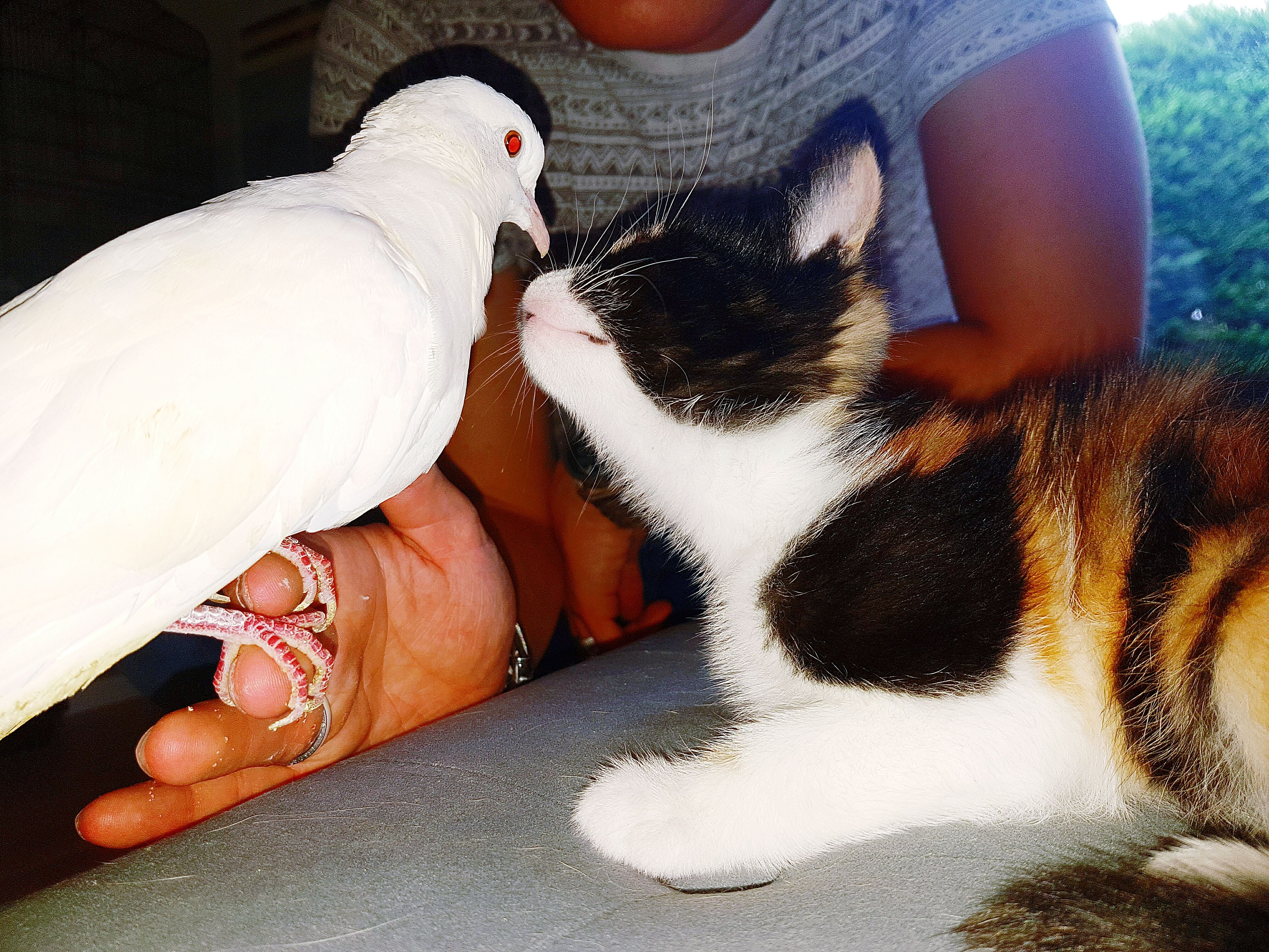one animal, togetherness, relaxation, domestic animals, pets, person, pampered pets, loyalty, zoology