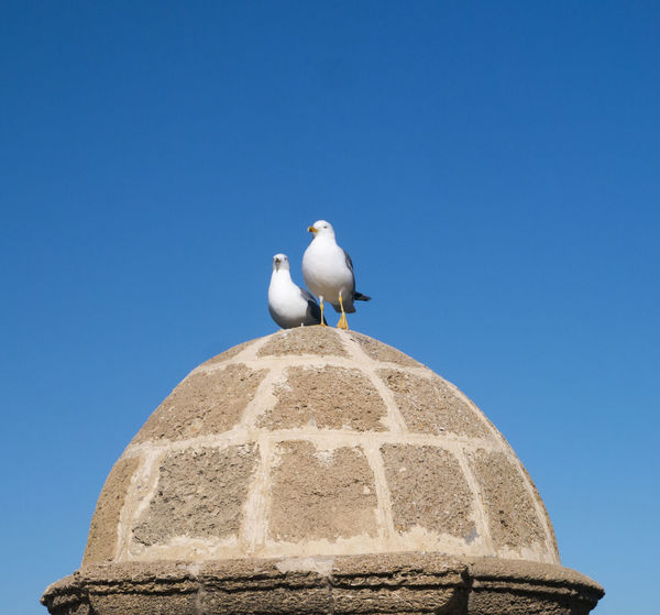 Animal Themes Architecture Bird Blue Built Structure Clear Sky Copy Space Friendship Nature No People Outdoors