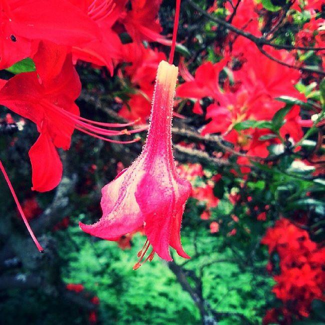 Natur Roteblume Ich