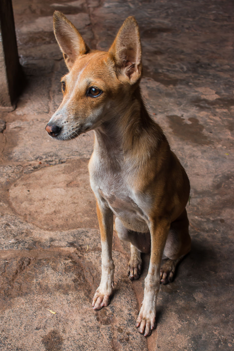 Beautiful stock photos of einhorn, one animal, animal themes, domestic animals, looking away