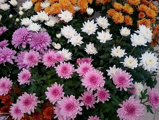 Flowers Beautiful Nature XPERIA XperiaZ1 Sony