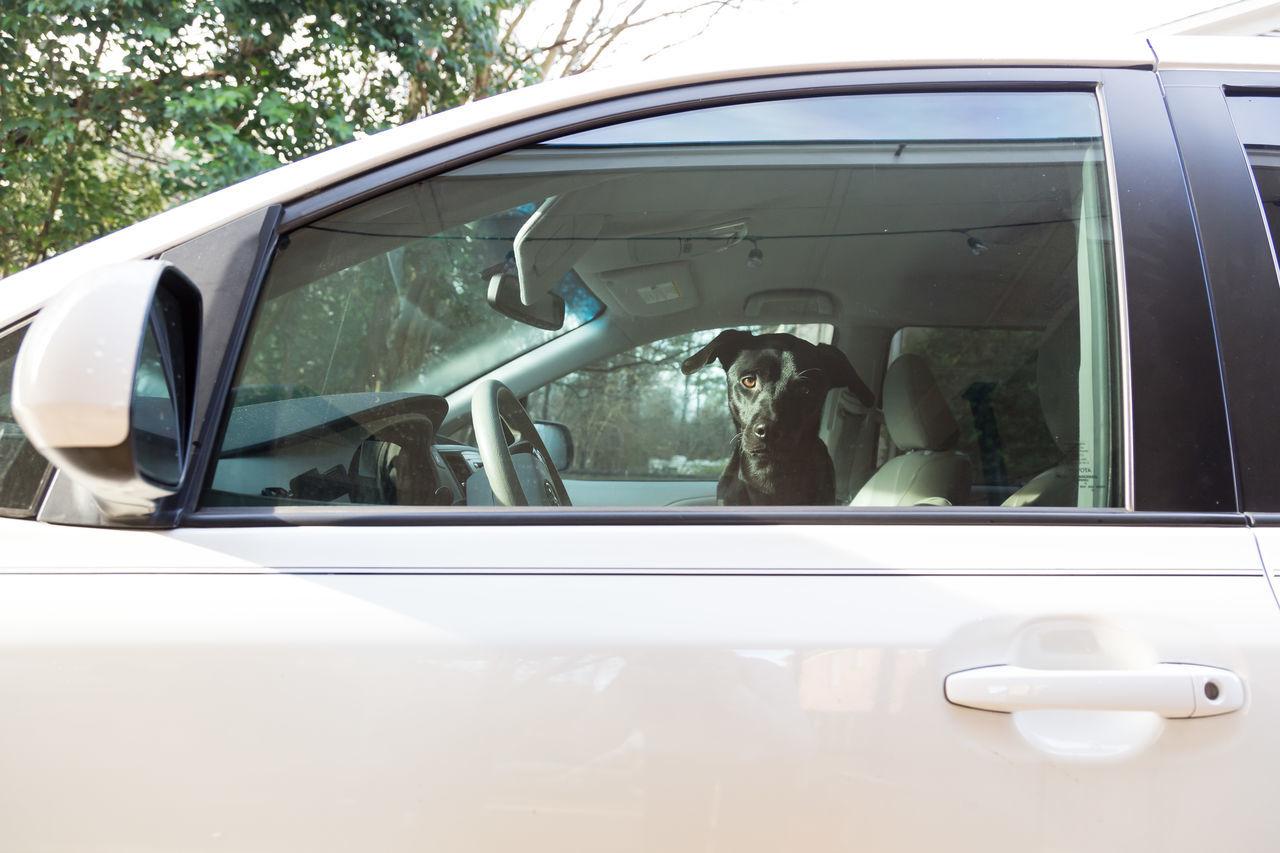 Black Dog Car Day Dog Land Vehicle Mode Of Transport No People Outdoors Transportation Window