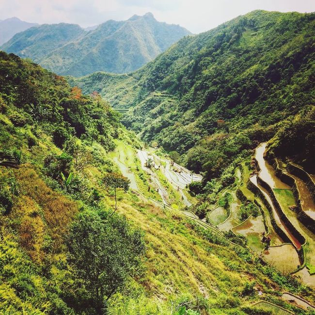 Banaue Rice Terraces Rice Fields  Nature Nature_collection Nature Photography Naturelovers Nature On Your Doorstep Nature's Diversities Mountains Mountain Mountain Range Mountain View Mountains And Sky Philippines Hiking Hikingadventures Banaue Mountain_collection