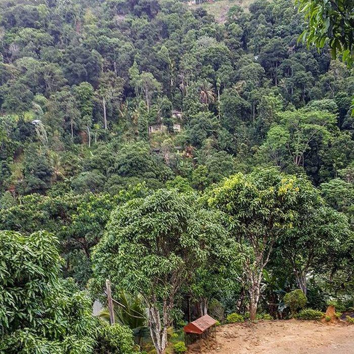Как же приятно после сухой жары центральной части острова окунуться в прохладу гор! Выключили кондиционер открыли все окна, едем и надышаться не можем! шриланка шриланка2016 SriLanka Srilanka2016 турсемействахеваге
