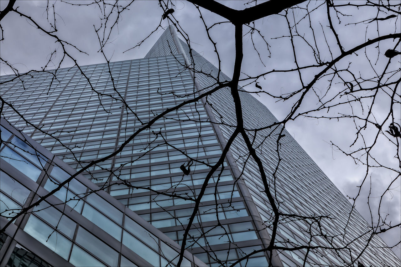 Architecture Nature In The City Tree And Building Tree And Citicorp Building NYC
