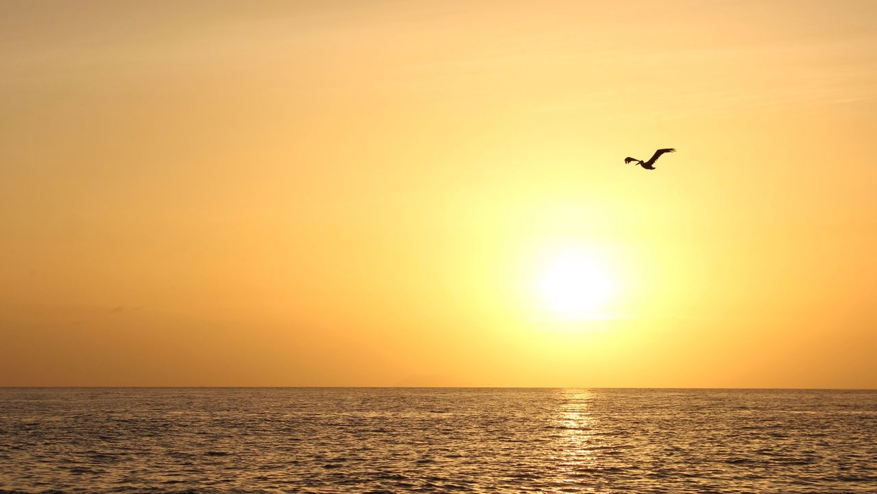 sunset, sea, silhouette, nature, scenics, beauty in nature, flying, horizon over water, tranquil scene, sun, water, tranquility, outdoors, idyllic, sky, bird, mid-air, one animal, no people, beach, animal themes, animals in the wild, clear sky, spread wings, day