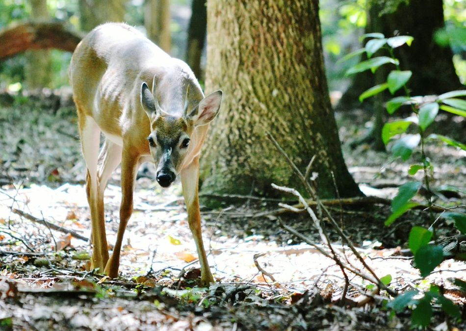 Beautiful stock photos of deer, Animal Themes, Animal Wildlife, Animals In The Wild, Day