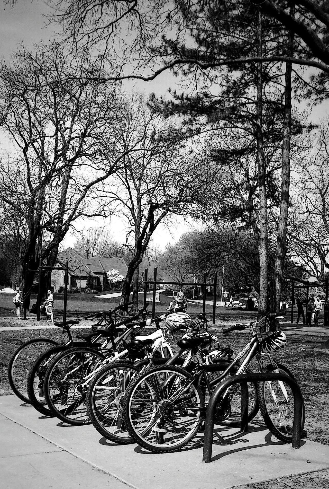 Tree Transportation Mode Of Transport Outdoors No People Day Nature Spring Day EyeEm Gallery Irwin Collection Bikes Bike Riding Spring Photography Bicycle Adventures Welcome To Black Black And White Photography Sky Parks And Recreation EyeEm Diversity Let's Go Smarter