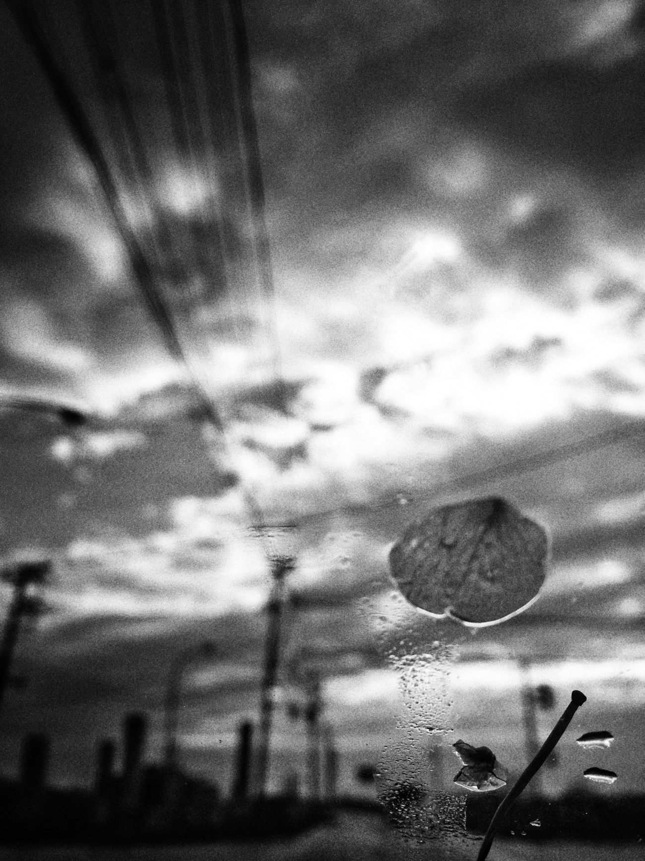 Sakura Clouds And Sky Sky Japan Black And White Blackandwhite Funiku IPhoneography