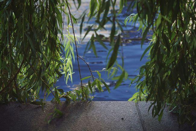 Sweden Swedish Nature Urban Nature A Bird's Eye View Stockholm Klarabergssjön Showcase August August 2016 Niklas