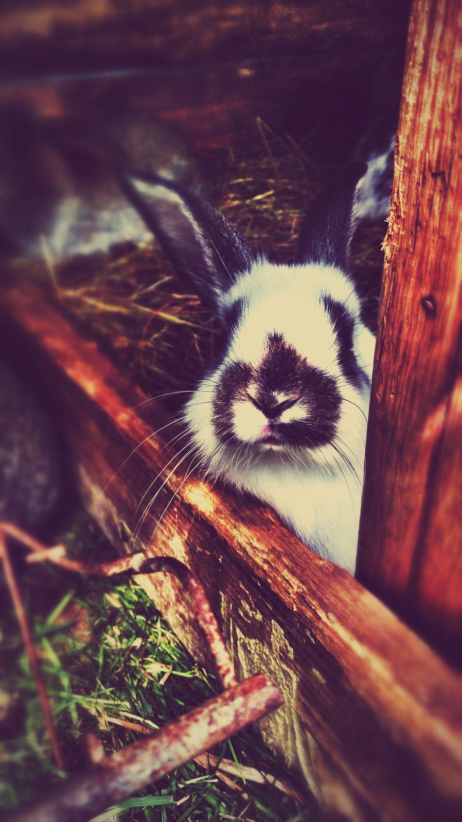 Beautiful stock photos of rabbit, Animal, Barriers, Cute, Domestic