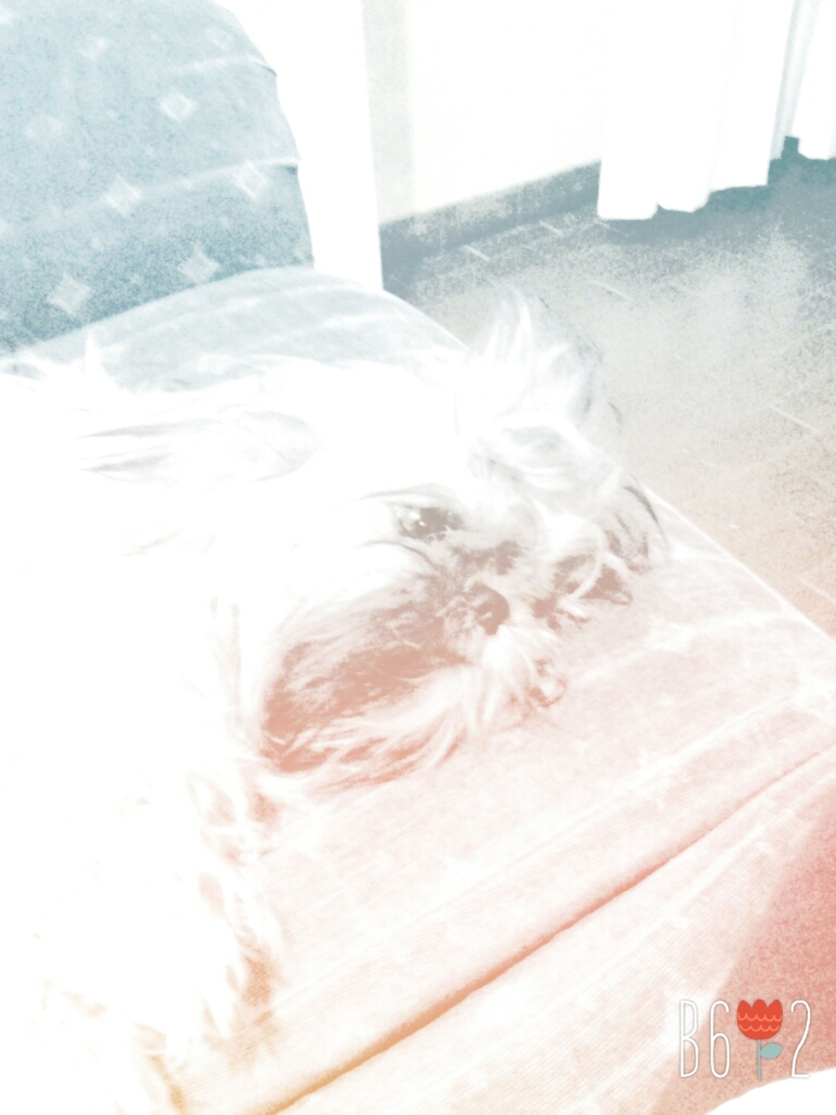 indoors, home interior, close-up, sunlight, white color, window, relaxation, high angle view, day, built structure, architecture, part of, lying down, pets, wall - building feature, domestic animals, headshot, bed