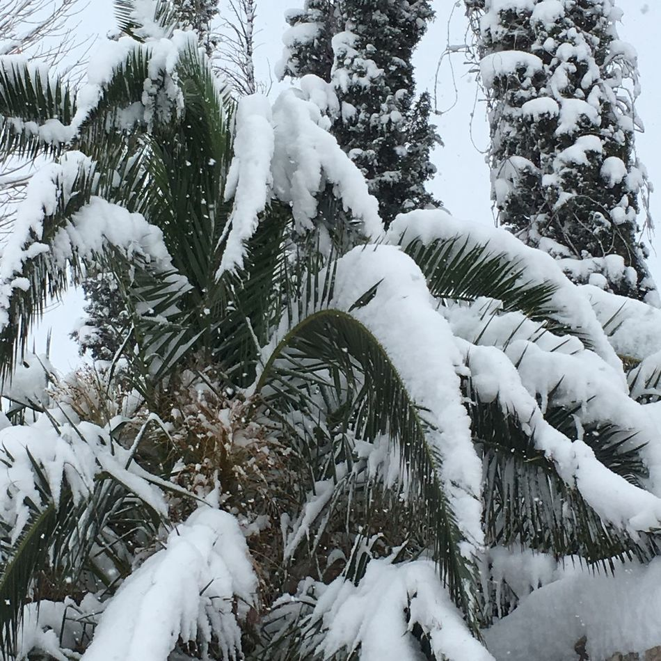 Winter Freezing Outside Beautiful Snow Palm Trees Hello World Check This Out Morning Pretty Cold White