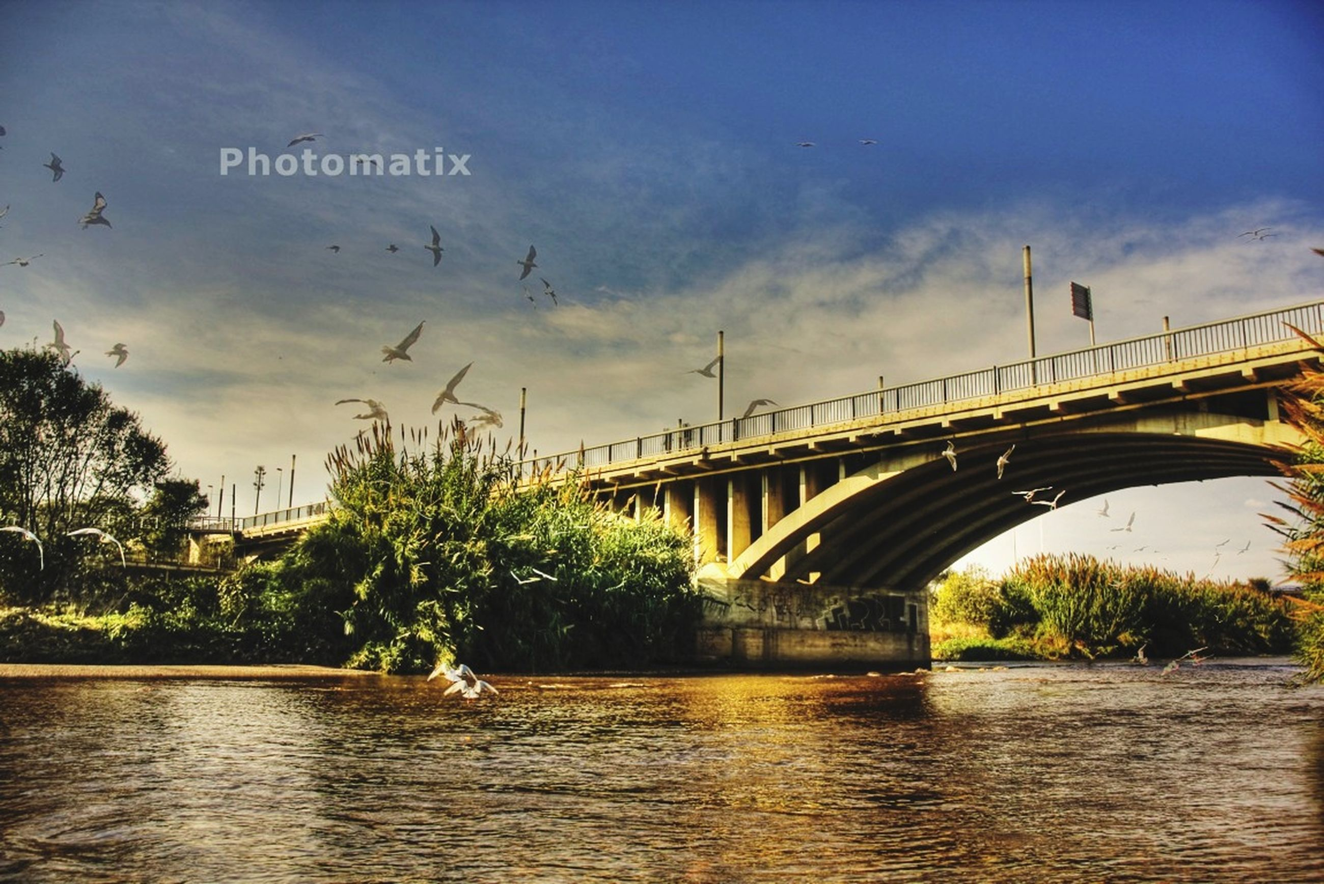 built structure, water, architecture, bridge - man made structure, connection, sky, bird, river, bridge, waterfront, tree, animal themes, cloud - sky, animals in the wild, wildlife, nature, building exterior, lake, day, outdoors