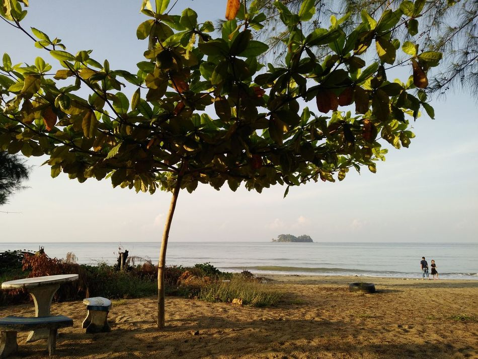 Tree Beach Sea Water Sky Nature Horizon Over Water Beauty In Nature tranquility Scenics Outdoors Sand Vacations Day People Branch Thailand Chantaburi Tranquility Adult Adults Only Only Women Morning View Morning