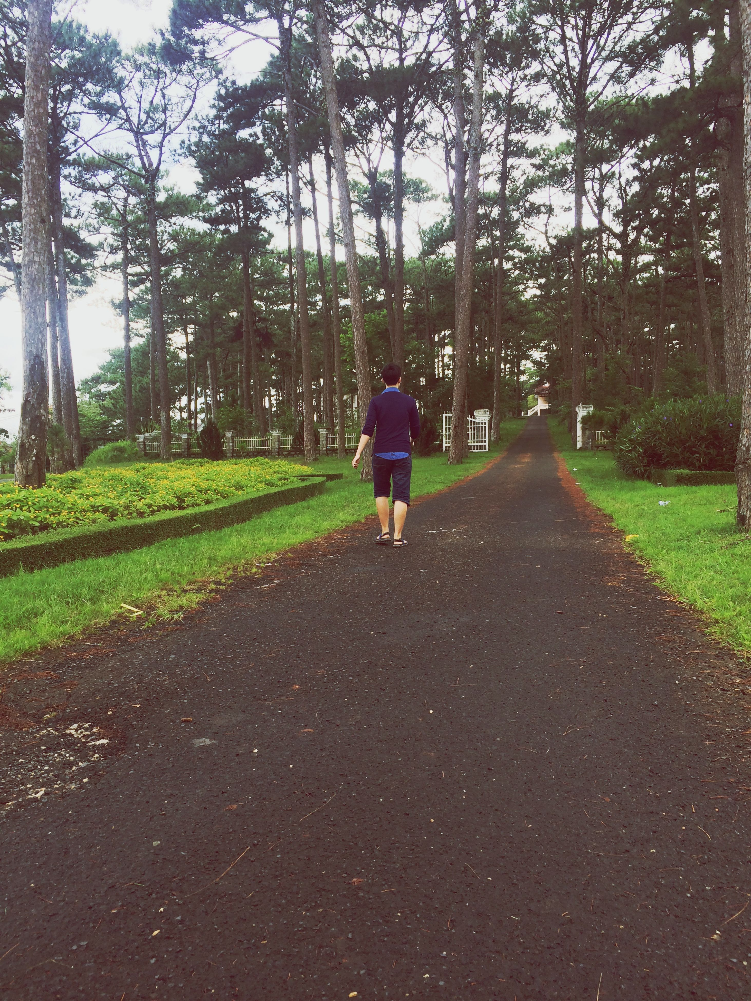 full length, tree, rear view, the way forward, walking, lifestyles, leisure activity, grass, casual clothing, diminishing perspective, road, men, footpath, growth, vanishing point, nature, dirt road, green color