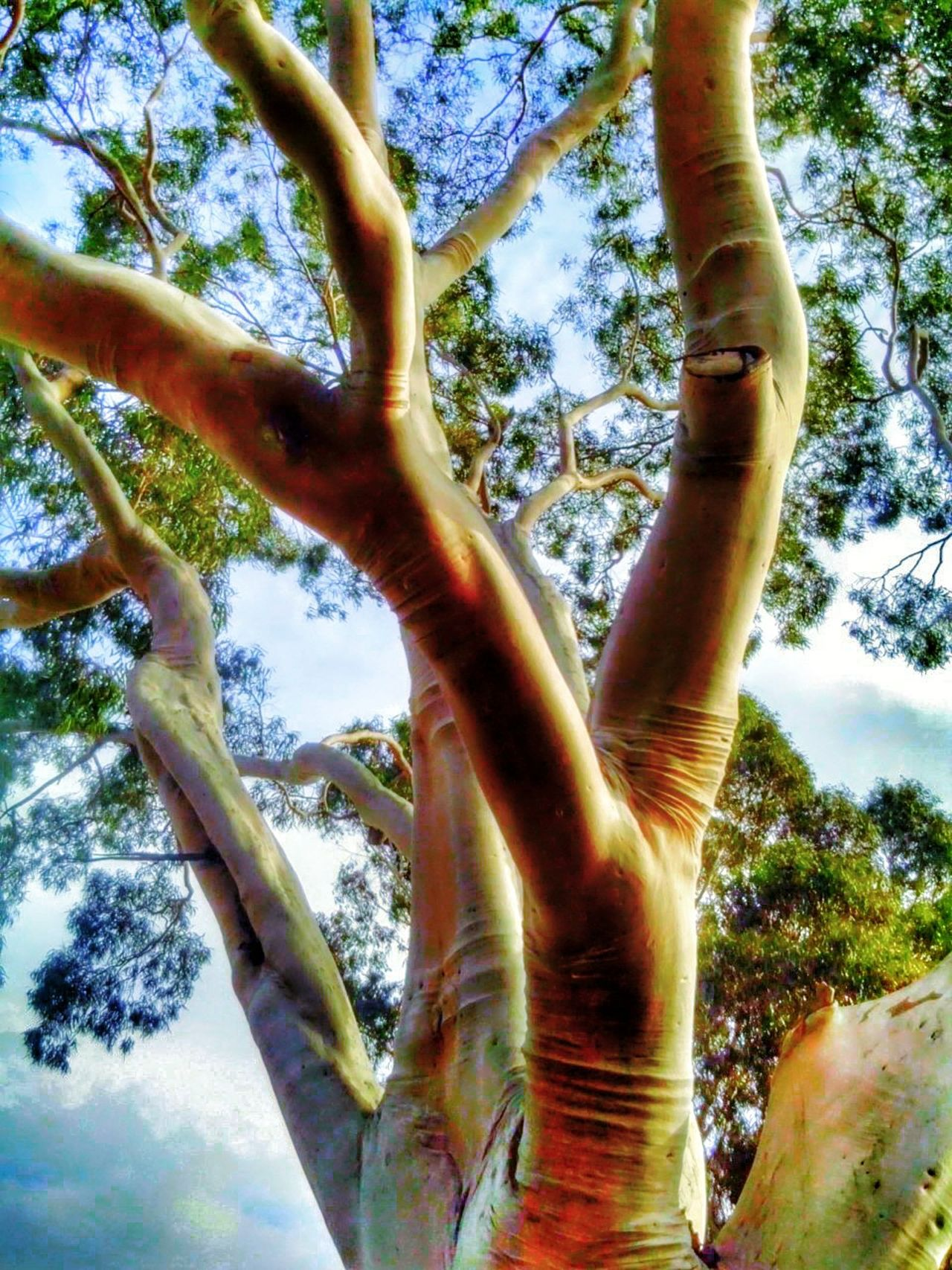 Tree Branches Climbing Trees