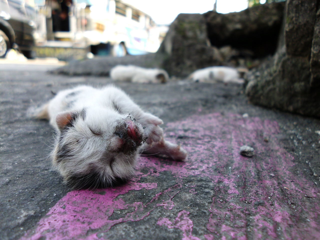 Justice Abandoned Sad Hurt! Injustice Kitty Kitty Cat Victim Homeless Cats Homeless Outdoors No People Animal Photography Streetphotography Philippines