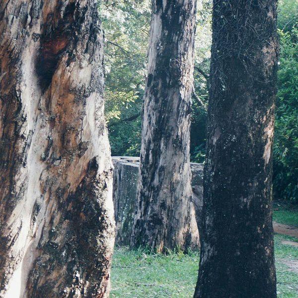 Woods! VSCO Vscodailyshot Vscogrid Vsconature VscoBr Vscosp Park Trees Vscogreen Wood Igbr Instagreen Instanature Nikon