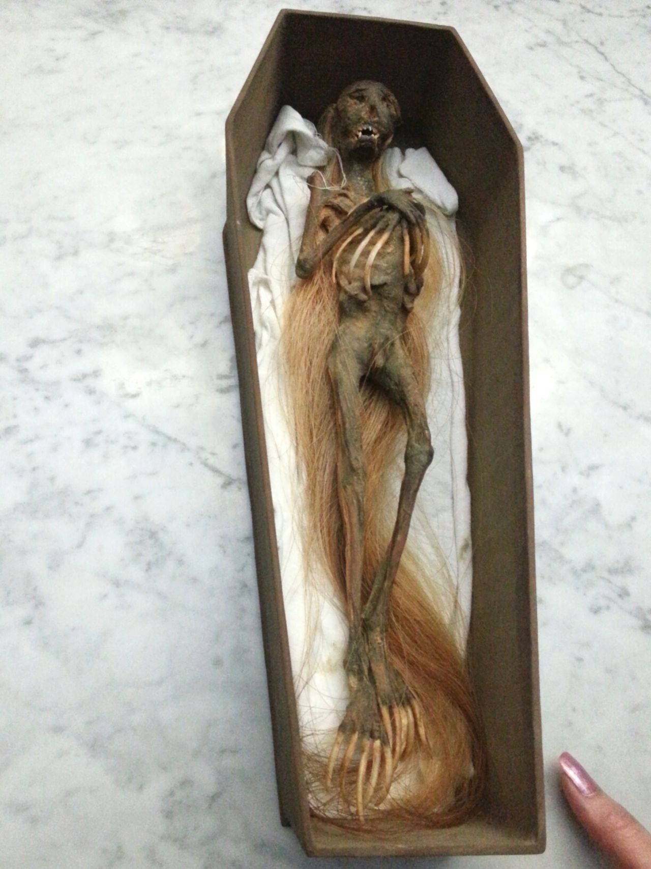 A mummified creature of some sort with human figure but their hair and nail do grow with time. It is a mythical creature commonly found in Indonesia. I am quite privileged to catch it on my last visit to Indonesia in a private collector's home. Creatures Mystical Mysticalcreatures Mummies Strange Strange Creatures EyeEm Indonesia INDONESIA Jenggot