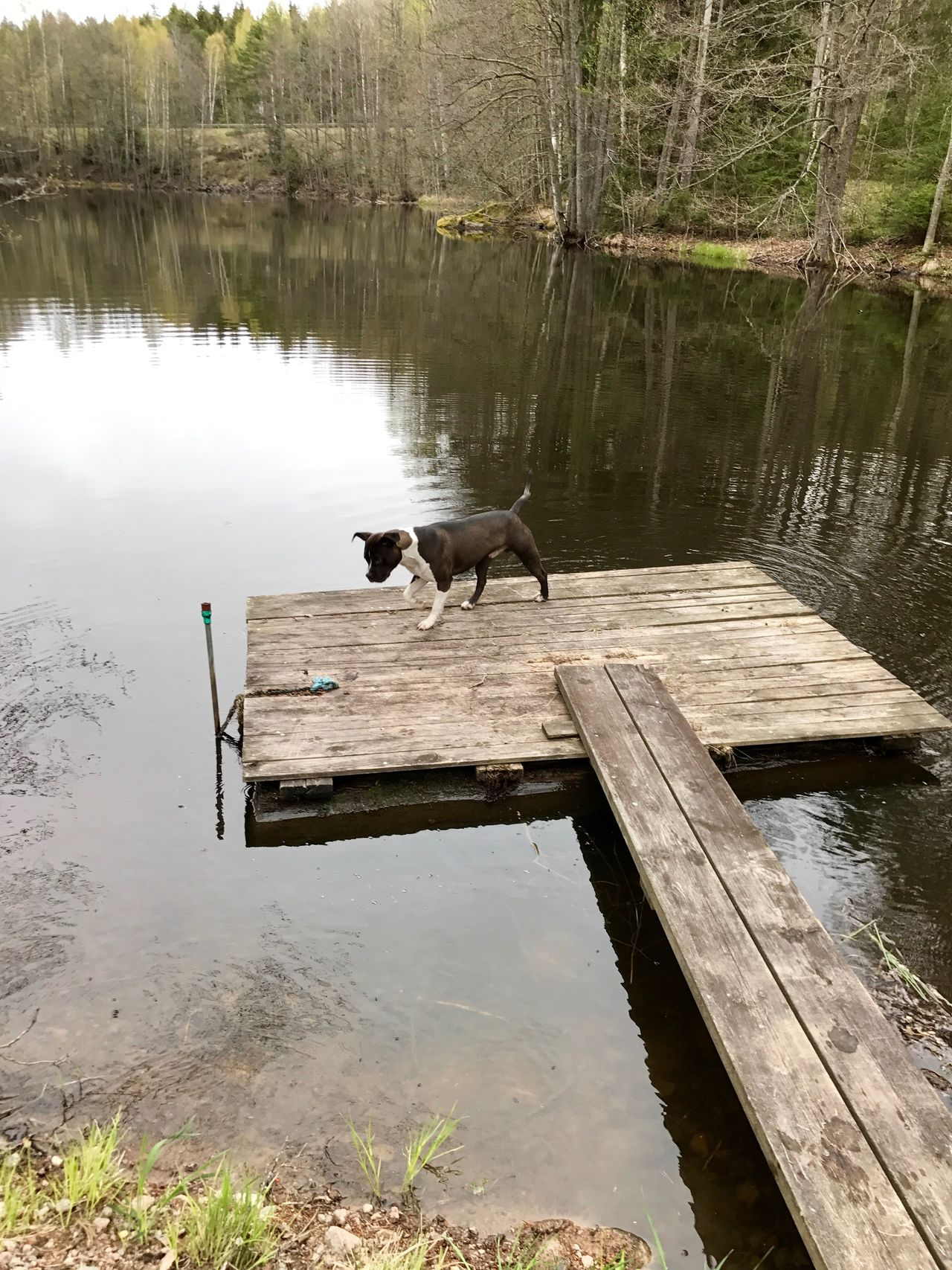Water Lake Animal Themes One Animal Reflection Day Wood - Material Nature Outdoors Mammal Animals In The Wild No People Domestic Animals Tree Bird Beauty In Nature