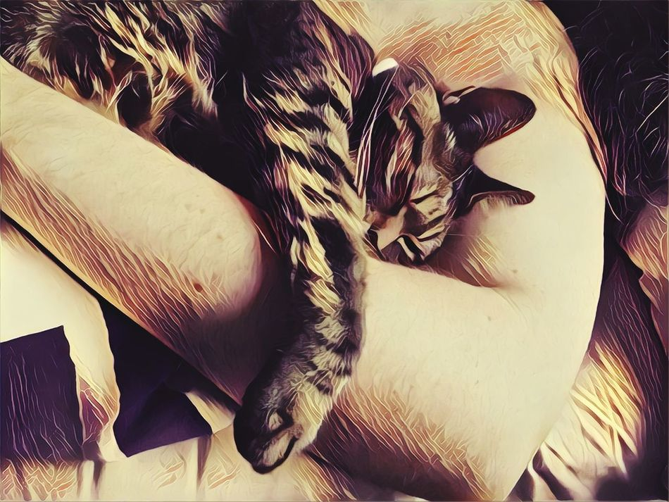 Close-up Human Body Part Friends ❤ Roadtrip Happiness Cats 🐱 Cat Lovers Human Hand Cat Photography Life Life Is A Beach Sweet Moments Happy Manipulated Sweetdreams  Friend ✌